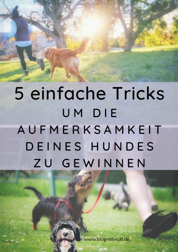 Titelbild zu 3 einfache Tricks um die Aufmerksamkeit deines Hundes zu gewinnen