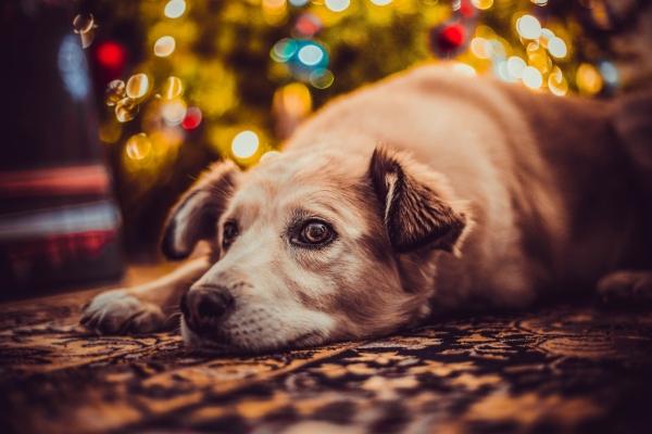 Hund unterm Weihnachtsbaum