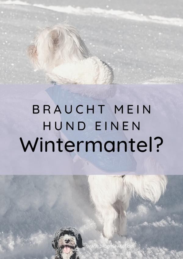 Braucht mein Hund einen Wintermantel?