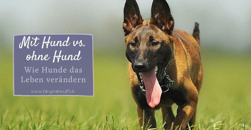 Mit Hund vs. Ohne Hund – Wie Hunde das Leben verändern