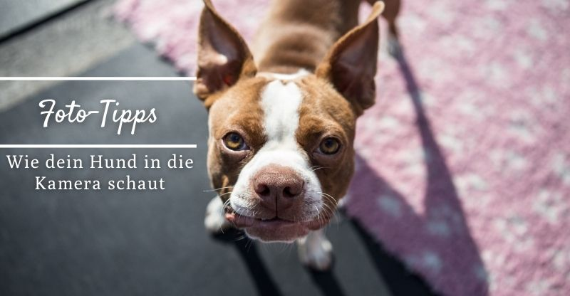 Foto-Tipps: Wie du dafür sorgst, dass dein Hund in die Kamera schaut