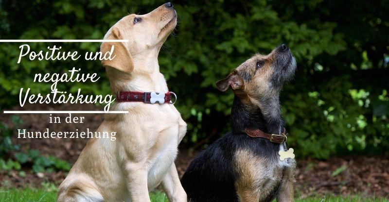 Positive und negative Verstärkung in der Hundeerziehung