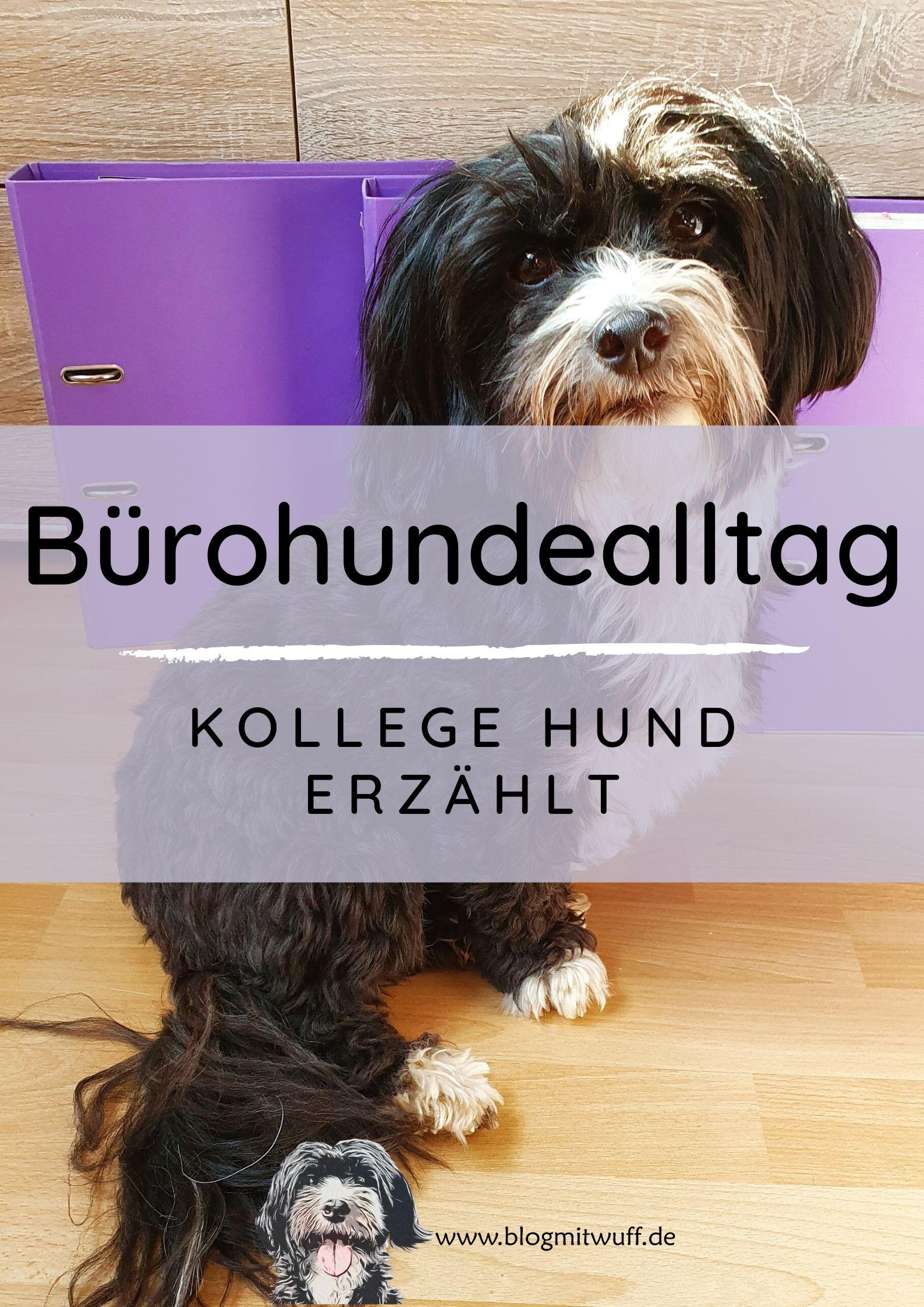 Bürohundealltag – Kollege Hund erzählt