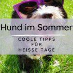 Hund im Sommer – Coole Tipps für heiße Tage