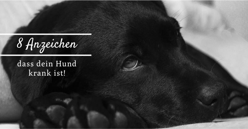 8 Anzeichen dafür, dass dein Hund krank ist