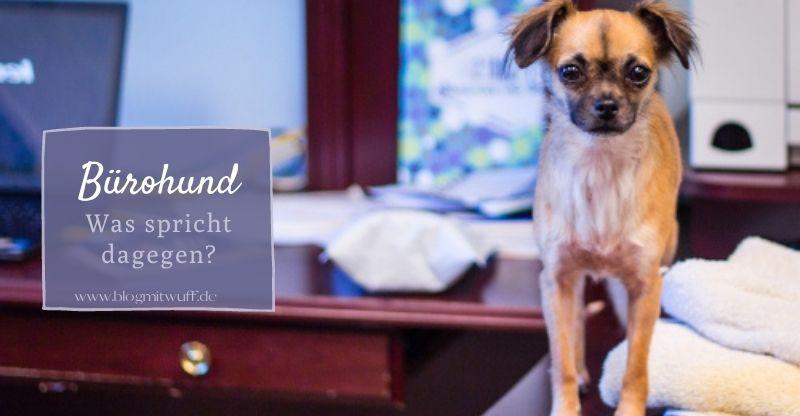 Bürohund: Was spricht dagegen?