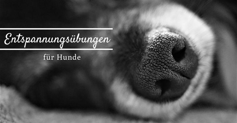 Entspannungsübungen für Hunde – Mit wenigen Handgriffen zu mehr Entspannung