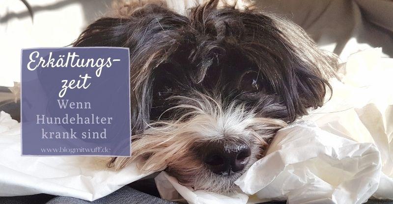 Erkältungszeit – Wenn Hundehalter krank sind