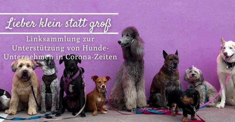 Lieber klein statt groß – Unterstützung für Hunde-Unternehmen in Corona-Zeiten