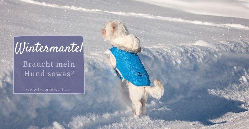 Wintermantel – Braucht mein Hund sowas