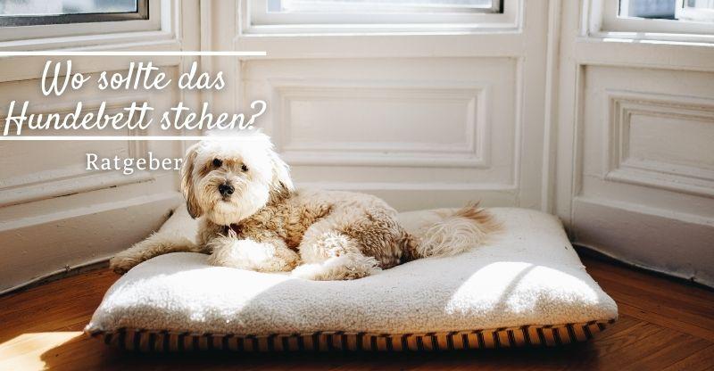 Wo sollte das Hundebett stehen?
