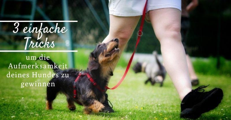 3 einfache Tricks um die Aufmerksamkeit deines Hundes zu gewinnen