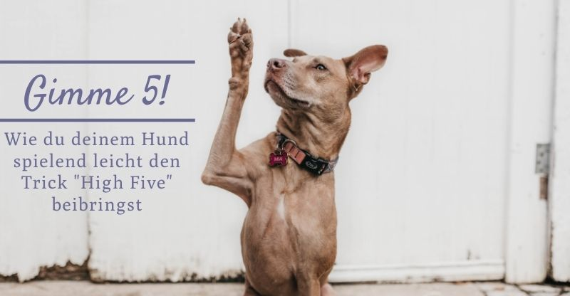 Gimme 5! Wie du deinem Hund spielend leicht den Trick High Five beibringst