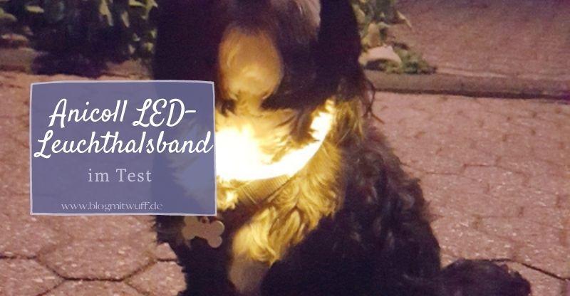 Werbung | Anicoll LED Leuchthalsband