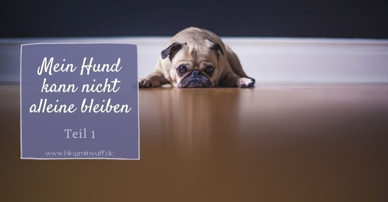 Mein Hund kann nicht alleine bleiben – Teil 1