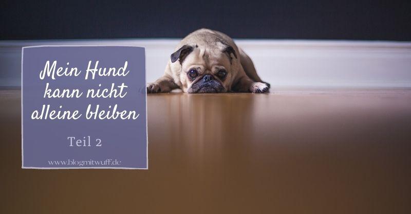 Mein Hund kann nicht alleine bleiben – Teil 2