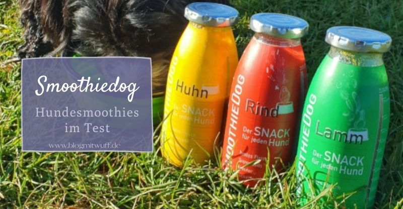 Smoothiedog – Hundesmoothies im Test