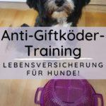 Anti-Giftköder-Training – Lebensversicherung für Hunde!