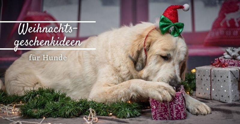 Werbung | Weihnachtsgeschenkideen für Hunde