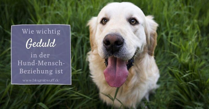 Wie wichtig Geduld in der Hund-Mensch-Beziehung ist
