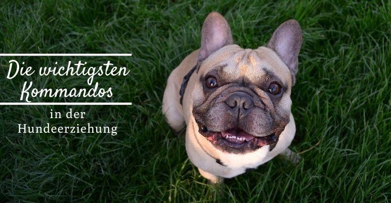 Die wichtigsten Kommandos in der Hundeerziehung