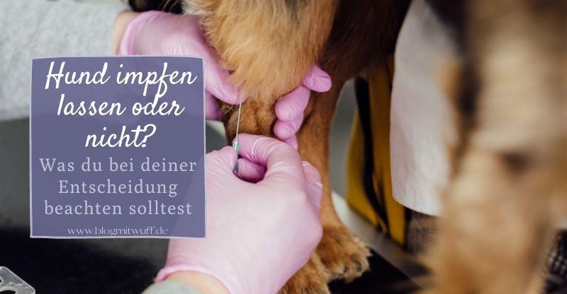 Hund impfen lassen oder nicht?