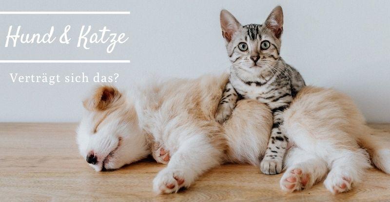 Hund & Katze – Verträgt sich das?
