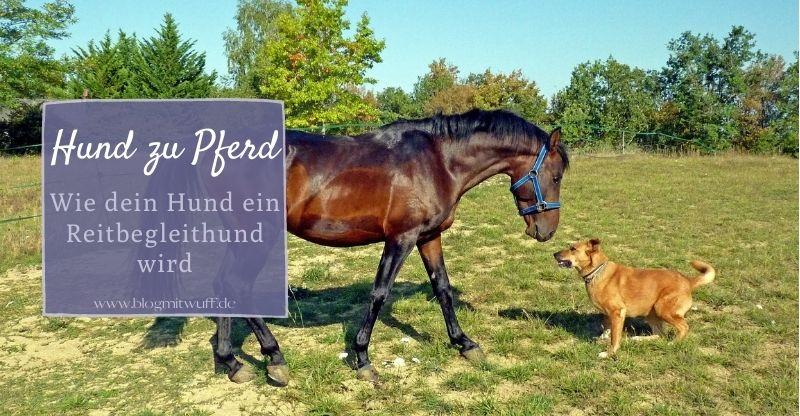 Hund zu Pferd – Wie dein Hund ein Reitbegleithund wird