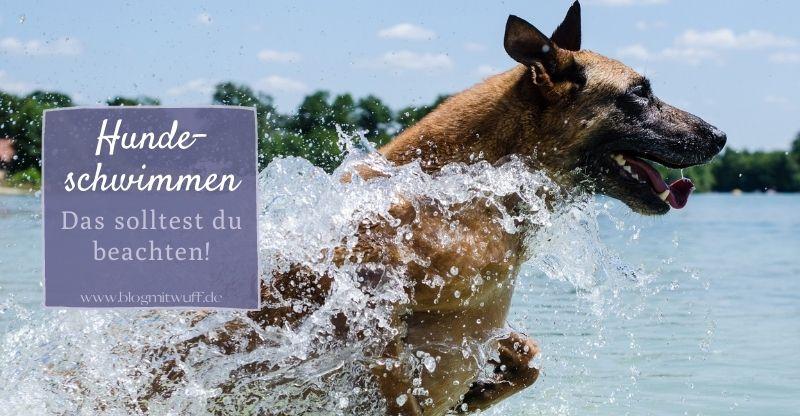 Hundeschwimmen – Das solltest du beachten