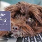 Gewerbeanmeldung – Notwendigkeit für Petfluencer
