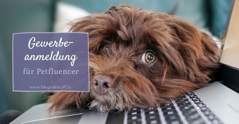 Gewerbeanmeldung für Petfluencer