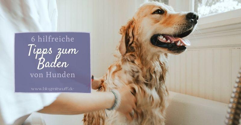 6 hilfreiche Tipps zum Baden von Hunden