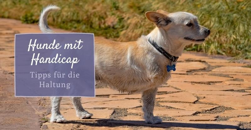 Hunde mit Handicap – Tipps für die Haltung