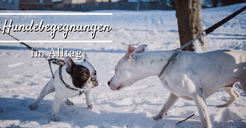 Hundebegegnungen im Alltag