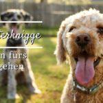 Hundehalterknigge – 7 Regeln fürs Gassi gehen