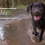 Ehrliches über die Hundehaltung