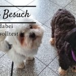 Hund zu Besuch – Was du dabei beachten solltest