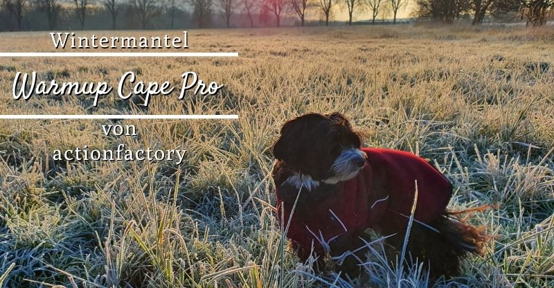 actionfactory Warmup Cape Pro – Wintermantel für Hunde