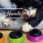 Learning Resources Buzzer – Bring deinem Hund das Sprechen bei!
