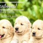 Welpenboom! Worauf du beim Welpenkauf achten solltest