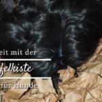 Schnüffelkiste – Suchspiel für Hunde