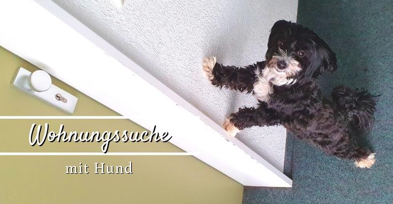Tipps für die Wohnungssuche mit Hund