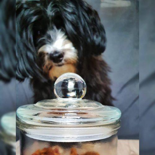 Wenn mein Hund reden könnte - Hund vor Leckerliglas02
