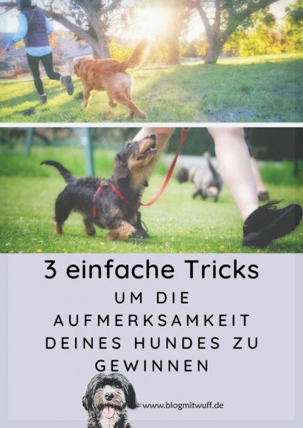 Pin zu 3 einfache Tricks um die Aufmerksamkeit deines Hundes zu gewinnen