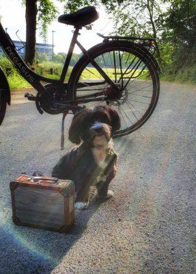 Bürohund auf dem Weg zur Arbeit