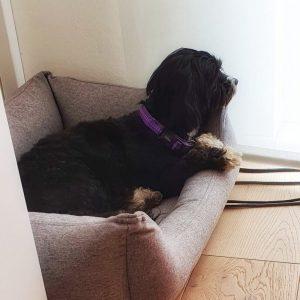 Bürohund im Bettchen