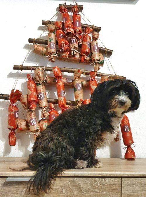 Buffy mit Adventskalender für Hunde