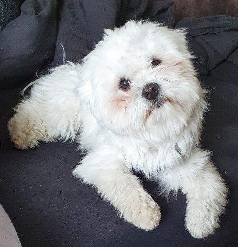 Henri Hund zu Besuch