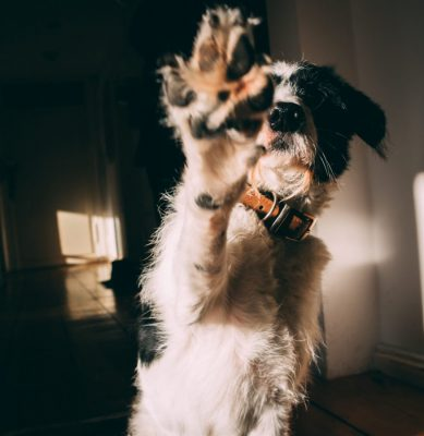 High Five Hund 01