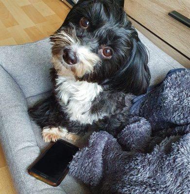 Hund mit Smartphone